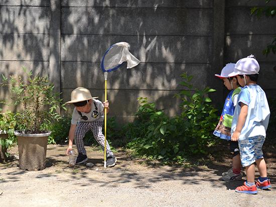 園庭の隅で虫探し。 年中組のお兄さんの様子をじっと見る年少組の子どもたち。